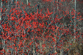 winterberry wishes a garden for all