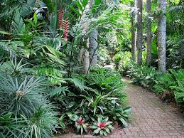 Tropical Landscape Ideas by 138 Best Tropical Landscaping Ideas Images On Pinterest Hibiscus