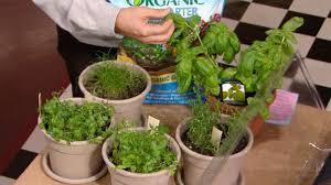 grow your own indoor garden abc news
