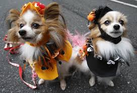 halloween for pets so popular it u0027s scary today com