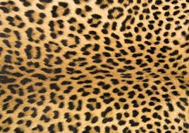 Cheetah Home Decor Leopard Print Rug Doormat Runner Area