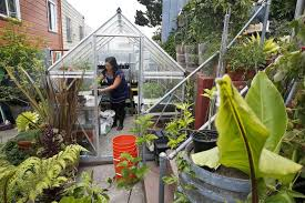 Raising Bees In Backyard by The Regulars Family Of Four Farms In Urban Spaces San Francisco