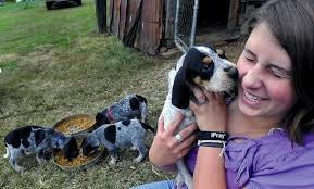 bluetick coonhound owners the other side of the bluetick coonhound story the upfront page