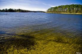 Arkansas forest images File lake in the ouachita national forest arkansas jpg jpg