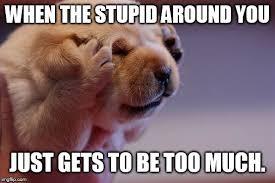 Meme Annoyed - annoyed pup memes imgflip