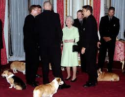 the queen is ditching her corgis a lament canada com