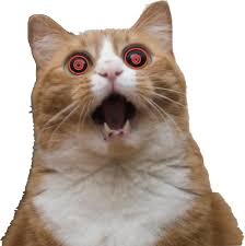 Scared Cat Meme - hypnotic scared cat blank template imgflip
