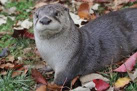 Kentucky wildlife images Oscar educational ambassador at the kentucky wildlife center jpg