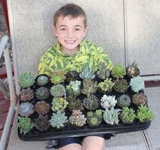plant of the month club succulent of the month club send gift succulents