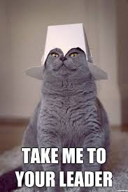 Cat Alien Meme - alien cat weknowmemes generator
