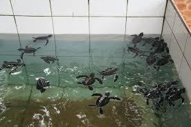 Blind At Birth Robins Have Wings Sri Lanka Post Script 6 From Bentota U0027s Sea
