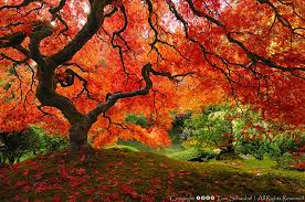 check out 16 of the world s most beautiful trees