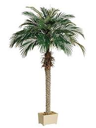 6 palm tree in rectangular plastic pot pack