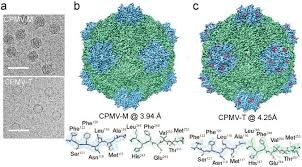 the structures of a naturally empty cowpea mosaic virus particle