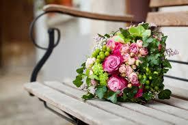 beautiful rose bush in sunlight photography flowers