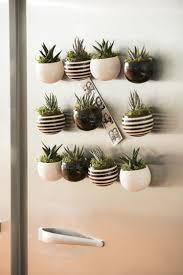 indoor succulent garden mini magnet succulent garden set of 3