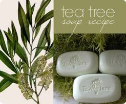 tree soap tea tree bath soaps manufacturer exporter