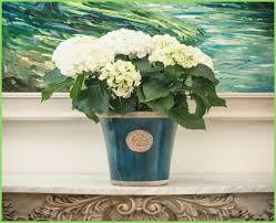 Beautiful Indoor Plants Relaxing Indoor Plants For Your House U2013 Webbird Co