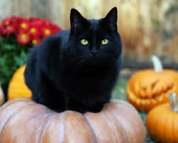 trick or treating with black cat witches u2013 coyote chronicle