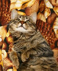 thanksgiving pet photos pet safety tips for holiday holiday safety tips for your pets