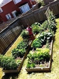 Veggie Garden Ideas Backyard Vegetable Garden Design Ideas Best Backyard Vegetable