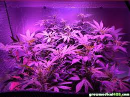 Plants That Grow In Dark Rooms by 250w Led Grow Journal 9 3 Oz Harvest Grow Weed Easy