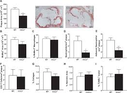 leukocyte specific ccl3 deficiency inhibits atherosclerotic lesion
