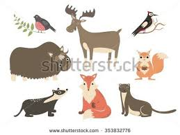 forest animals cartoon characters bullfinch woodpecker stock