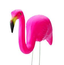 what u0027s your pink flamingo u2013 shannon presson
