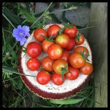 is thanksgiving a pagan holiday mabon or thanksgiving recipes u0026 crafts u2013 vegan kitchen magick