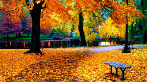 fall pumpkin wallpaper hd fall leaves wallpapers wallpapercraft