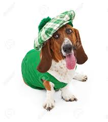 a funny basset hound dog dressed for st patrick u0027s day with a