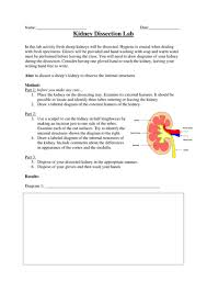 kidney theory u0026 dissection by katrinagarner teaching resources tes