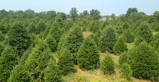 creek trees columbus nj willard family