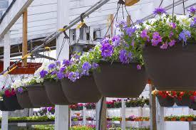 winnipeg greenhouses and garden centre ron paul garden centre