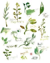 les herbes de cuisine herb print watercolor herbs kitchen print botanical poster