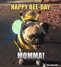 Birthday Pug Meme - happy birthday mom funny party animals wish mommy mother momma