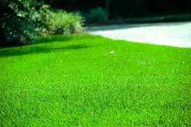 fertilization lawn ornamental pest insect disease