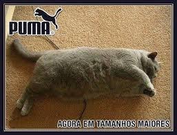 Puma Meme - fat puma cat meme by nikoboco memedroid