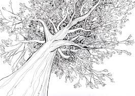 fascinating 10 tree drawings design decoration of best 25 oak