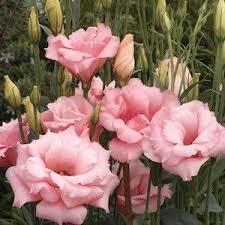 best 25 flower seeds ideas on pinterest flowers garden