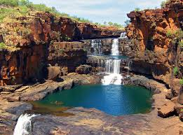 native plants of western australia western australia attractions and landmarks wondermondo