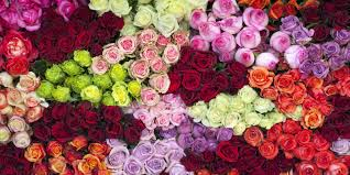 Red Color Meaning 14 Rose Color Meanings What Do The Colors Of Roses Mean For