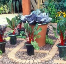 vegetable container gardening 18 interesting container vegetable