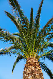 palm tree and sky free stock photo public domain pictures