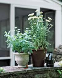 herb basics martha stewart