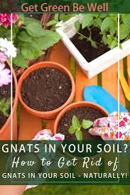 miracle gro moisture control garden soil ingredients home