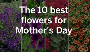 flowers for s day the 10 best flowers for s day pennlive