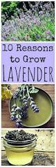52 best grow herbs images on pinterest herbs garden gardening