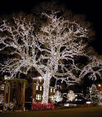 best christmas lights for outdoor trees my web value